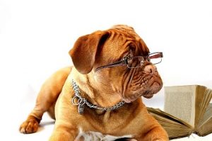 chien qui lit des livres
